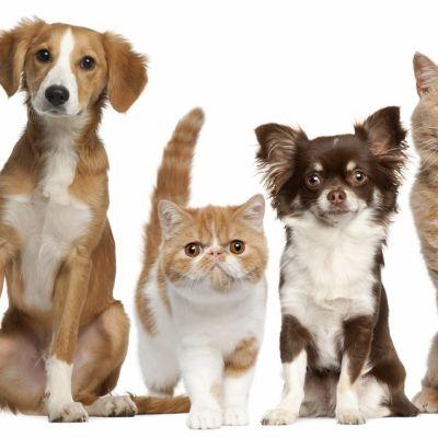 Quel âge humain aurait mon chien/chat ?