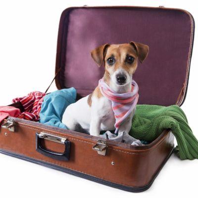 Quelles sont les précautions à prendre lorsque vous voyagez avec votre animal ou que celui-ci va en pension ?