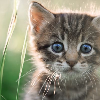 Comment bien accueillir un chaton ?